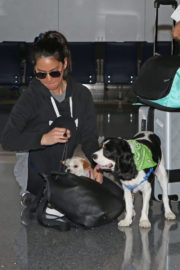 Olivia Munn Stills with Her Dogs at LAX Airport in Los Angeles