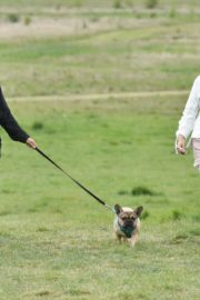 Chloe Ross Out with her Dog in Chigwell 2020/06/06 1